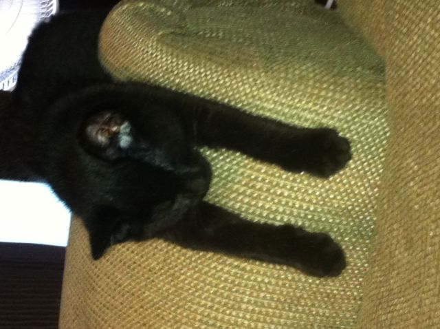 kitty falls asleep anywhere