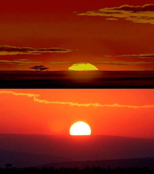 "Safari Holiday Snaps vs. Stills from the ""The Lion King"""