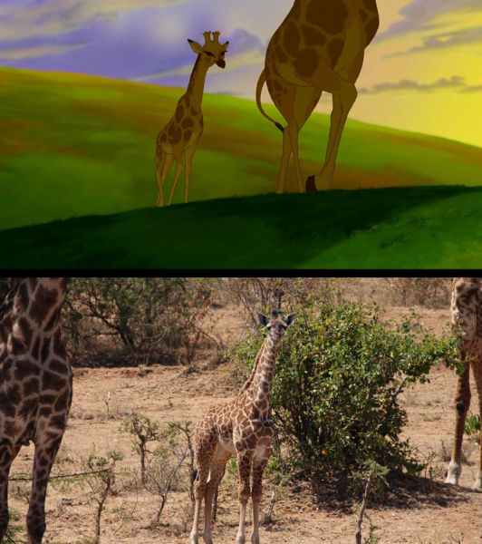 """Safari Holiday Snaps vs. Stills from the """"The Lion King"""""""