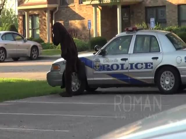 Prankster in Ridiculous Dog Suit 'Pees' on Police Car, Runs Away…