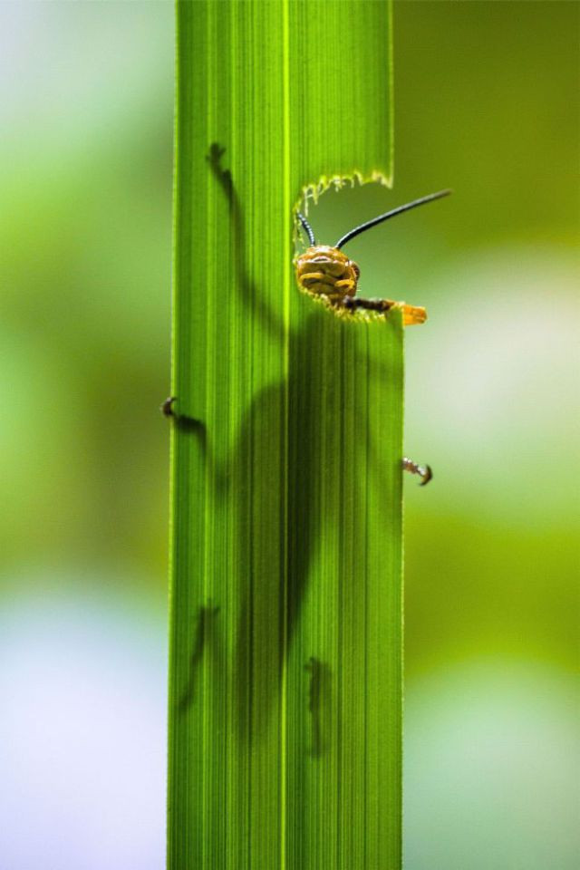 Close-Up Photos of a Grasshopper Eating a Plant