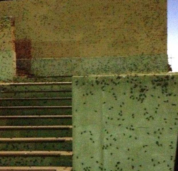 Oklahoma City Attacked by a Swarm of Crickets