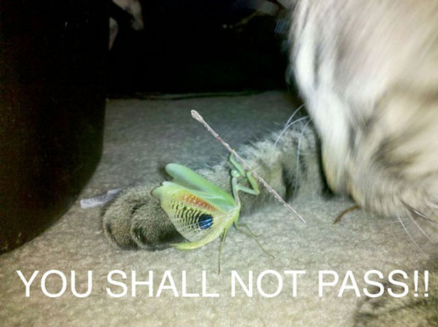 You Do Not Have Permission to Pass…