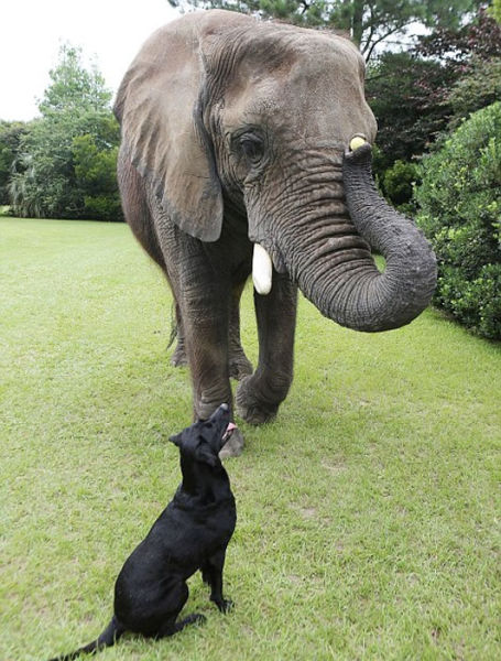 The Most Unlikely Animal Playmates Play Fetch Together