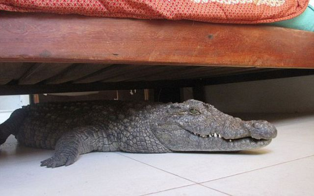Proof That Sometimes There Really Are Monsters Under the Bed