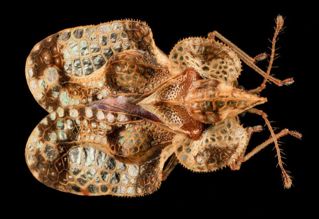 Zoomed-in Photographs Capture Arthropods in Minute Detail