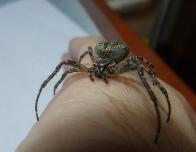 Would You Keep a Spider as a Pet?