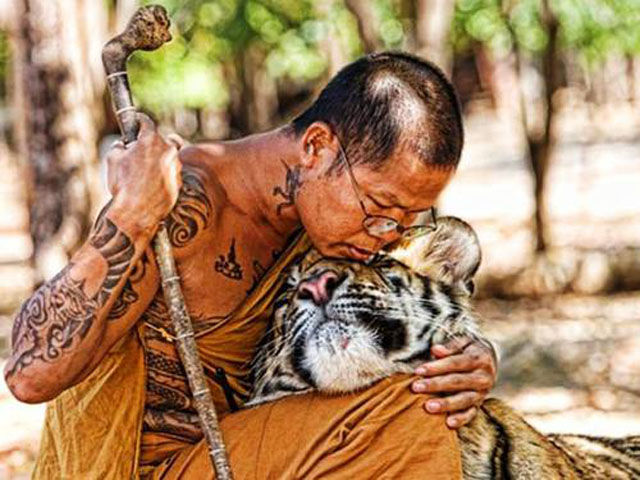 Special Bonds between Humans and Wild Animals