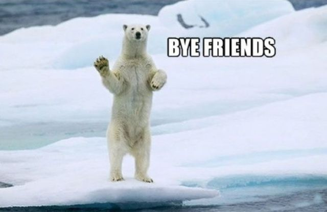 A Very Helpful Polar Bear