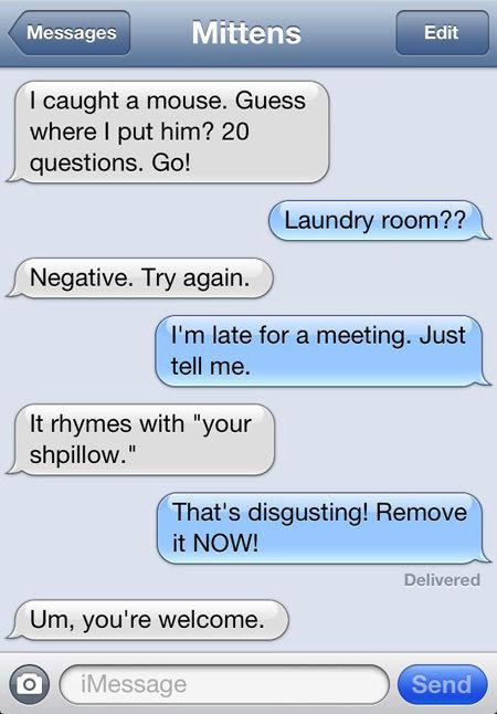 A Texting-Cat: Enough Said