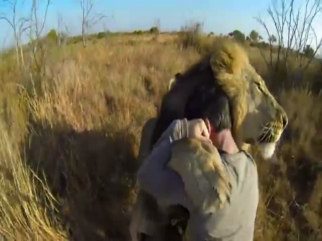 Hugging a Lion: Terrifyingly Cute and Awesome!