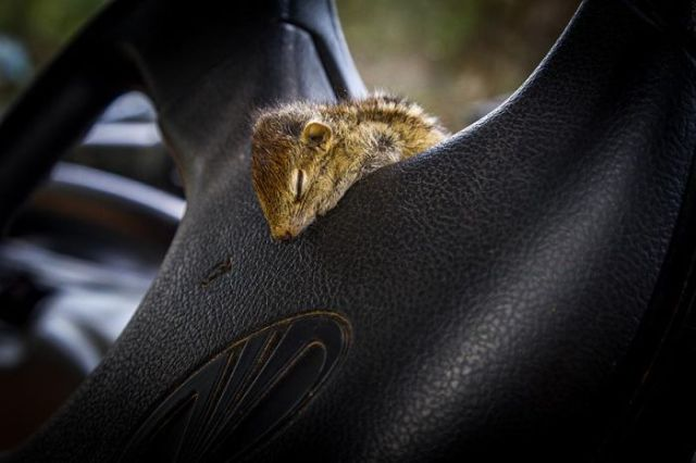 Adorable Photos of a Rescued Baby Palm Squirrel
