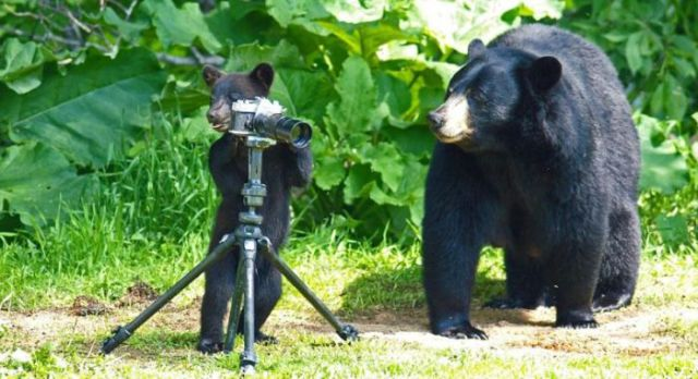 Inspired and Imaginative Bear Family Photo Shoot