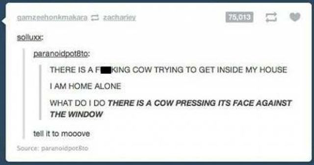 Silly Puns That are So Awful They're Actually Pretty Funny