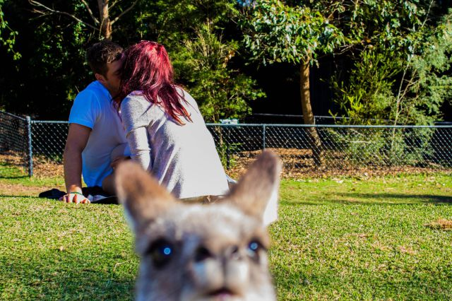 A Photobomb Round-Up That Will Make Your Monday Brighter