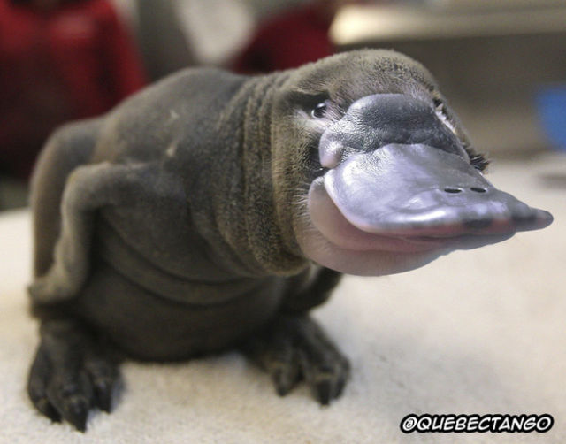 Animal Mashups That are a Little Bit too Weird for Words