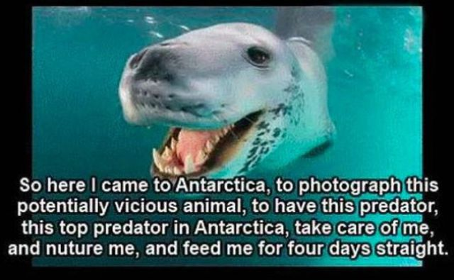 The Story of One Photographer's Encounter with a Leopard Seal