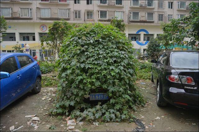 An Overgrown Car Forgotten in Time…