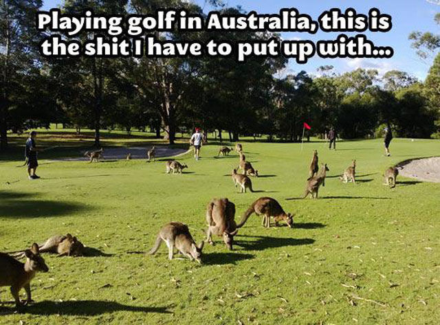 Australian Life Is Not for Everyone