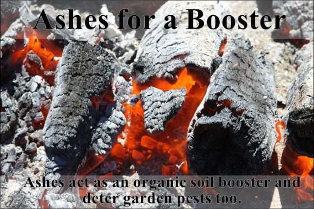 Easy Hacks to Make Gardening a Breeze