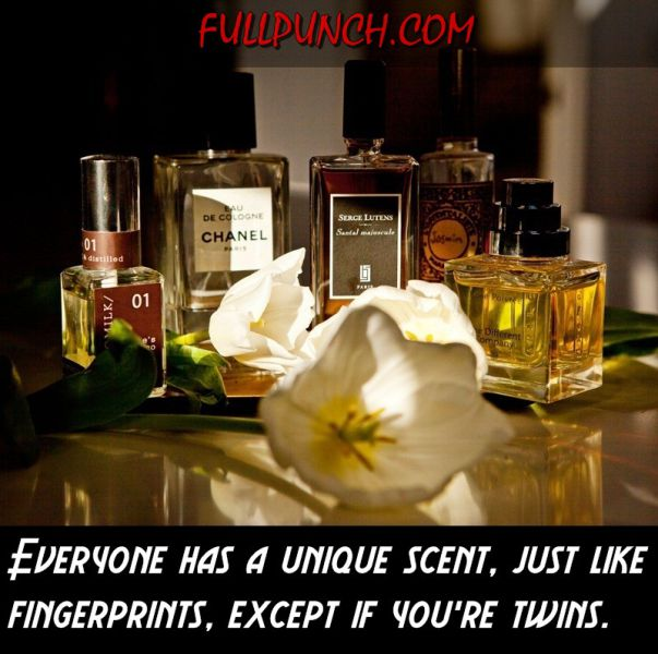 Fun Facts That Will Teach Your More about the Human Body
