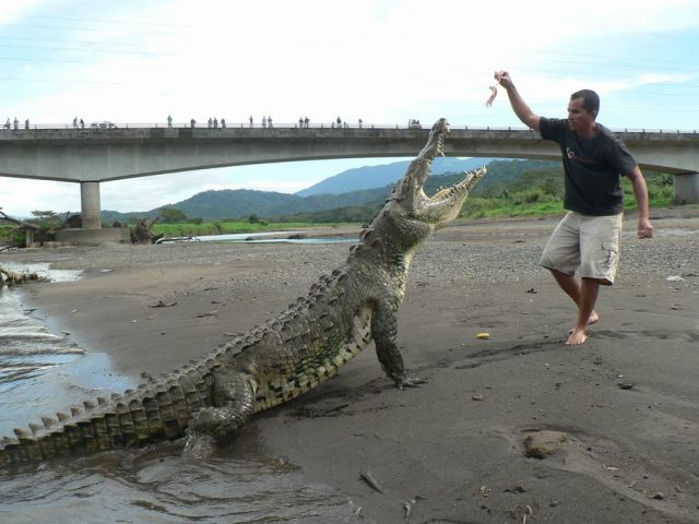 Costa Rican Tour Guides Have Nerves of Steel