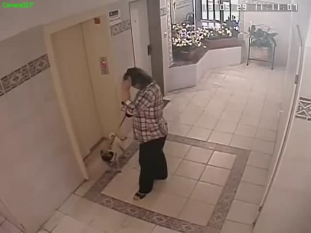 Dog Has a Near Death Experience with an Elevator