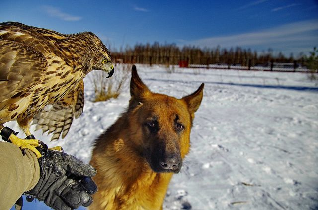 An Unlikely Animal Duo Who Are the Best of Friends