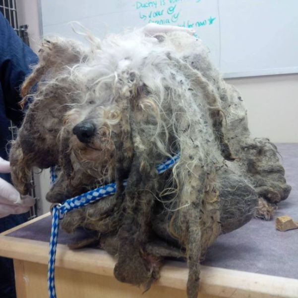 The Sweet Rescue Story a Dog who Had Turned into a Monster