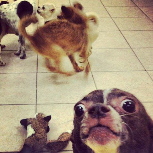 Epic Animal Photobombs