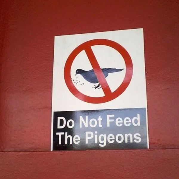 Beware of the Pigeons