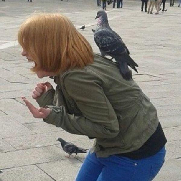 Beware of the Pigeons