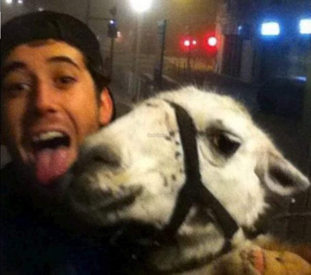 French Teens Act as Drunken Llama Rescuers