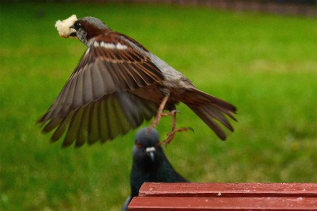 Take a Life Lesson from the Sparrow Not the Pigeon