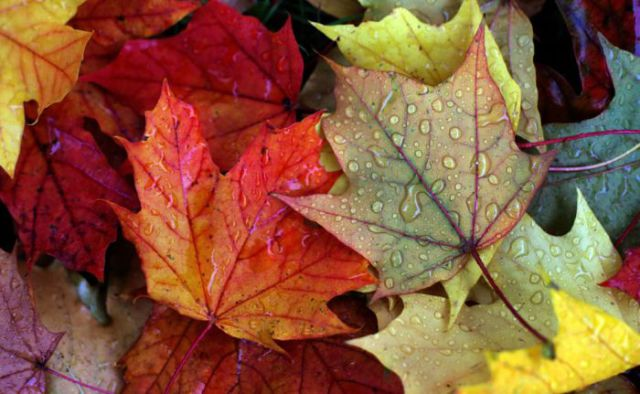 Pretty Photos Show That Fall Is in the Air
