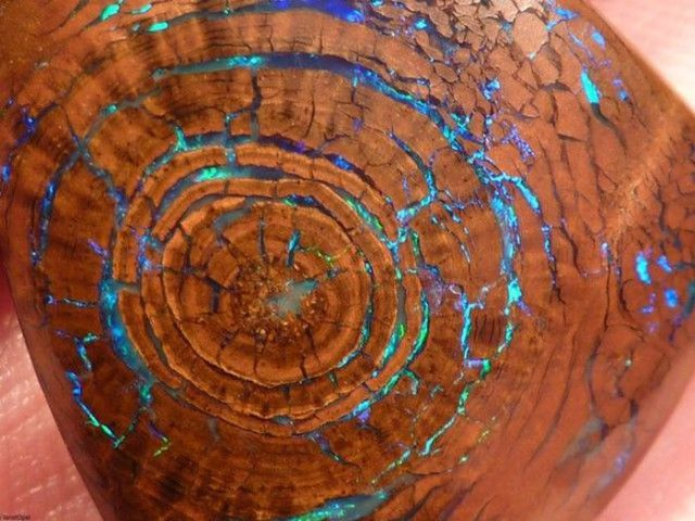 Beautiful and Rare Opalized Wood Boulder Opal