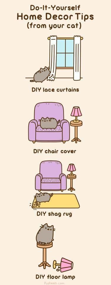 If You Own a Cat You Will Definitely Relate to This