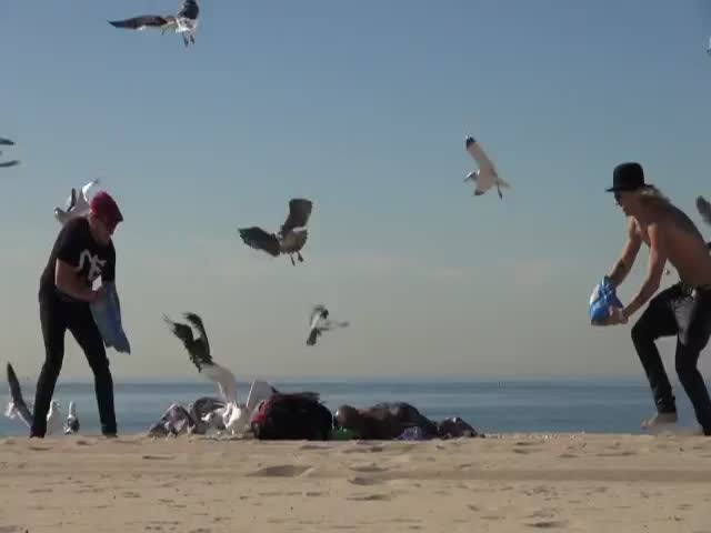 Feeding Seagulls Popcorn Next to Sunbathers at the Beach