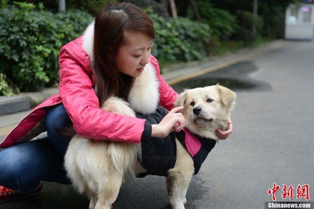 Chengdu Hachiko
