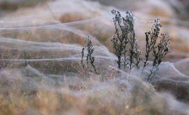A Terrifying Spider Invasion in Australia