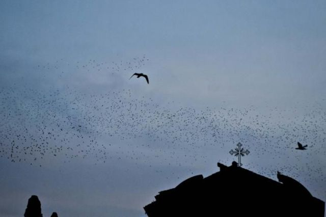 Rome Hit Hard by Masses of Bird Poo!