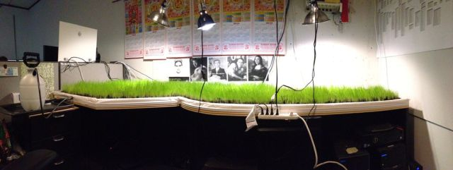 You Holidayed So Long That Grass Grew on Your Desk Man