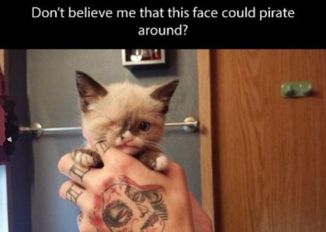 A Kitten We Could All Learn from An Inspirational Kitten who Kicks-Ass