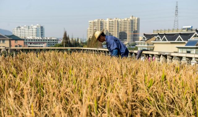 Chinese Farmer Solves Space Problem in an Unusual Way