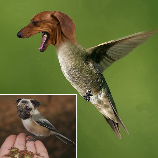 Is It a Dog or a Bird?