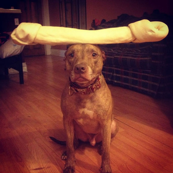 You Can Stack Anything You Want on This Dog