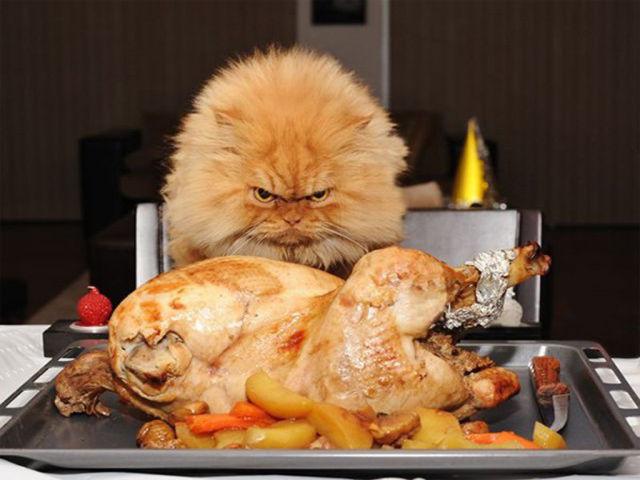 Happy Thanksgiving, Folks!