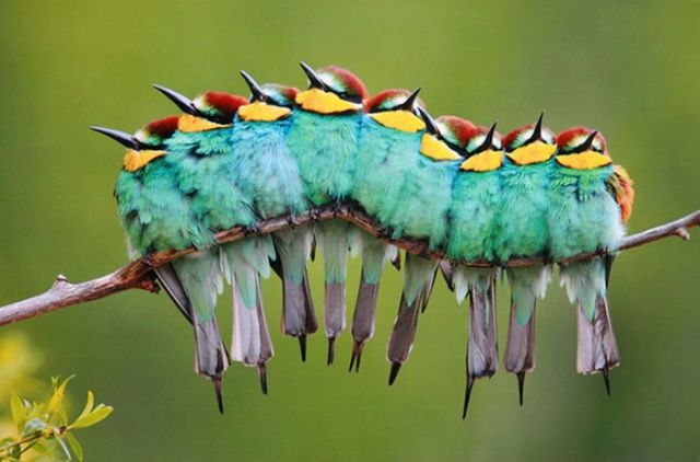 Beautiful Pictures of Animals