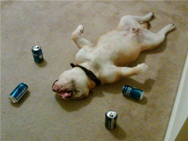 Why You Should Be Careful Not to Get Really Wasted