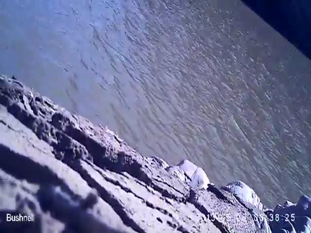 Sea Eagle Steals Camera, Takes Selfies